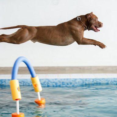 NY-waterdog-201911