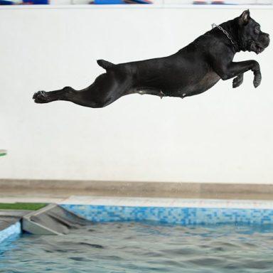 NY-waterdog-20194