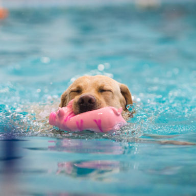 waterdog-II-201919
