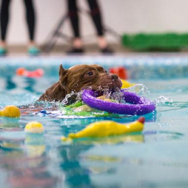 waterdog-II-20192