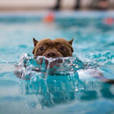waterdog-II-20193