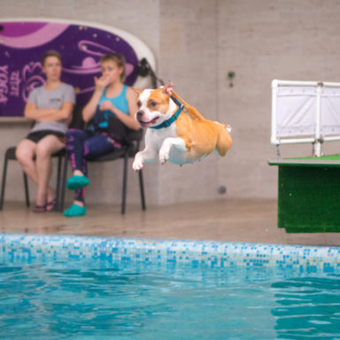 waterdog-II-20197